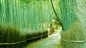 Sagano_Bamboo_Forest
